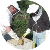 Honey Bee Hives 1